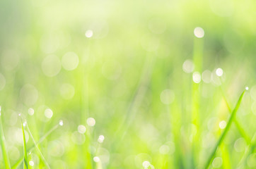 green nature background, blur dew on grass at morning.