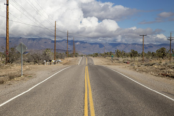 Asphalt road/highway with mailboxes through desert (Arizona, USA)
