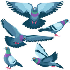 Pigeons on white background / Five pigeons in cartoon style