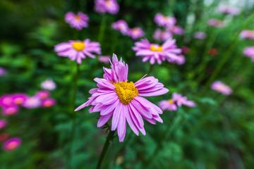 Abnormal flowers