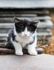 little homeless fluffy kitten sits with sad eyes and looks straight
