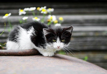 funny  hungry little kitten is sitting alone on the street and looks sad