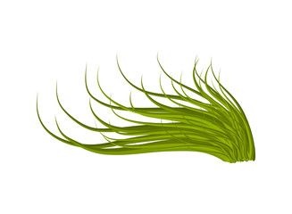 grass vector symbol icon design. Beautiful illustration isolated on white background