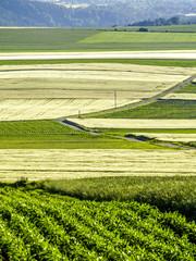 Agrarlandschaft, Österreich, NIederösterreich, Waldviertel