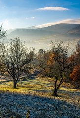 apple orchard in mountains at autumn sunrise