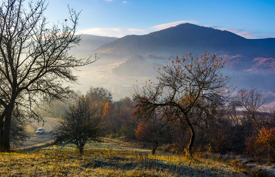 apple orchard in mountains at autumn sunrise