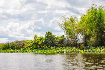Corroboree Billabong with its banks covered in lotuses, are a paradise for birds, fish and other wildlife in Northern Territory, Australia.