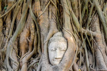 Buddha head overgrown by roots of the tree in Wat Mahathat Ayutthaya Thailand