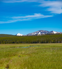 Grassy field with a mountain in the background