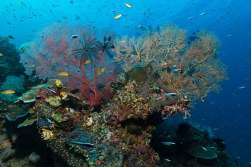Bunte Rifflandschaft