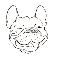 happy face of a French bulldog