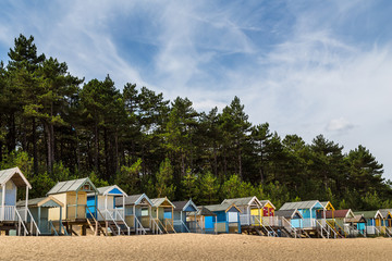 Beach huts by the pine forest