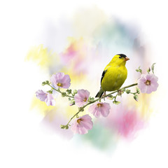 yellow bird watercolor