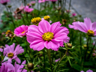 Nice flowers in town