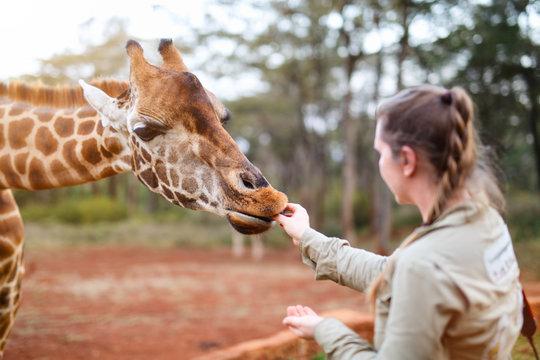 Young woman feeding giraffe in Africa