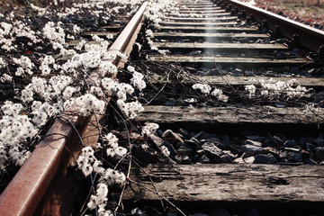 old, forgotten railway track covered by plants