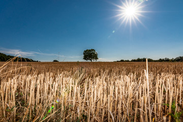Agriculture landscape with a burning shining sun over the dry fields