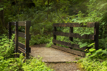 A sunlit wooden bridge on a forest path