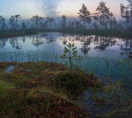morning in the swamp, Leningrad oblast. Russia