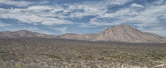 LA PAZ DESERT, BAJA CALIFORNIA SUR. MEXICO