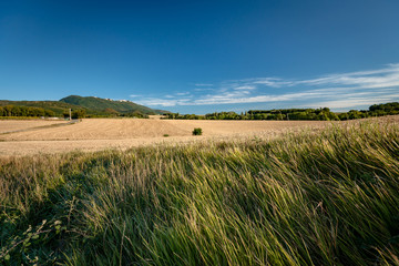 Typical French landscape in summer with grain fields