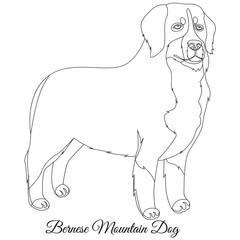 Bernese Mountain dog outline