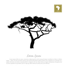 Black silhouette of a tree and white background. African nature. Umbrella acacia