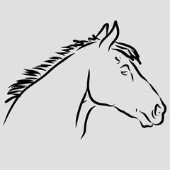 Lipizzaner, Pferdekopg, Strichzeichnung, Handzeichnung