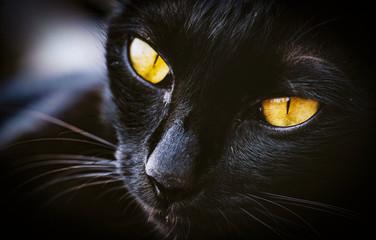 Macro of cat pet mammale animal