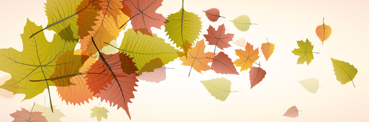 Vector banner dead leaves, autumn background