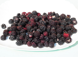 Freshly picked wild Blackberry. Wild Blackberry Photo.