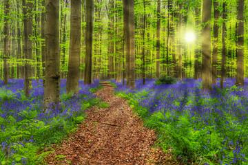 Garden Poster Forest Famous forest Hallerbos in Brussels Belgium