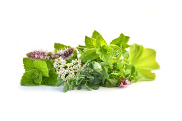 Wall Mural - Fresh green herbs isolated