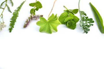 Wall Mural - Fresh herbs on white background