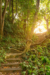 Stairs leading up a walkway in the jungle. Beautiful path in the forest during sunrise.