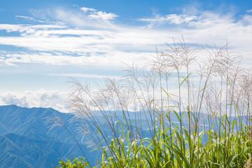 三つ峠から見る山並とススキ