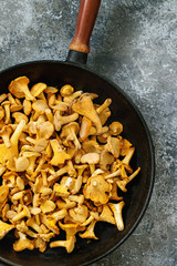 Heap of fresh uncooked forest mushrooms chanterelle in iron-cast pan over gray texture background. Top view with space