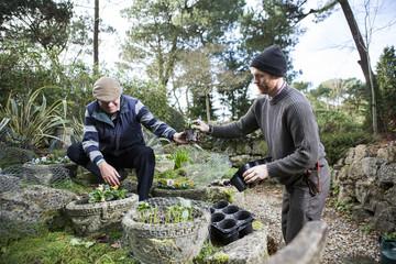 Two men planting flowers in garden, Bournemouth, County Dorset, UK, Europe