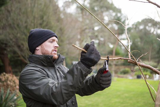 Man pruning branch of tree with shears, Bournemouth, County Dorset, UK, Europe