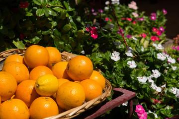 Freshly picked oranges in a basket