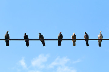 Flock of pigeons on electronic wires.