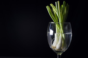 spring onion in glass still life style