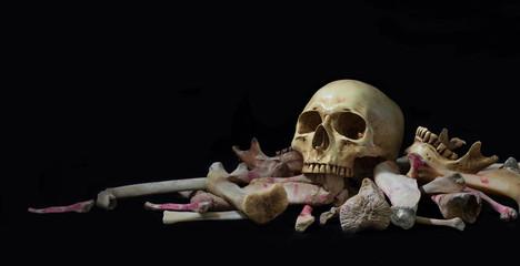Skull on pile bone on black background in Halloween night