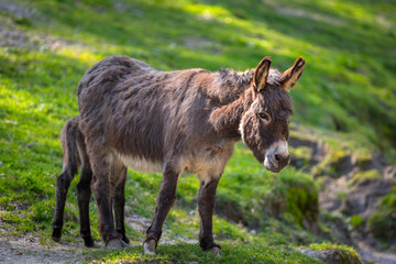 Donkey on the grassland