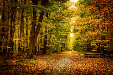 Gold october light in forest