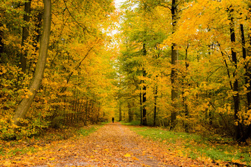 Lone person walking in a beautiful forest in autumn