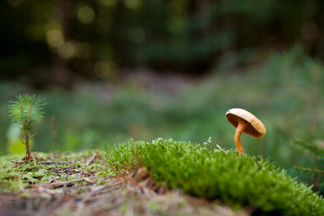 Einsamer Pilz