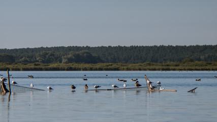 Zugvögel auf dem Wasser
