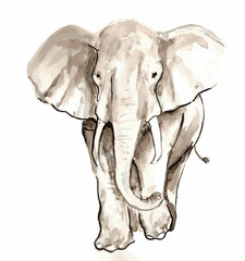 Watercolor illustration of an African elephant