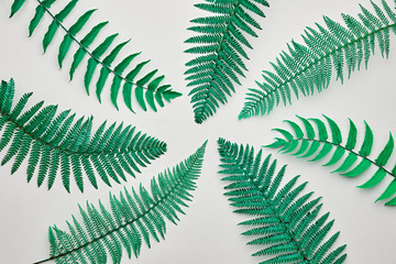 Fern Tropical Leaf. Floral Leaves Fashion Concept. Vivid Design. Art Gallery. Creative Bright Color Style. Green Summer fashion Background